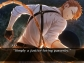 Code-Realize-Bouquet-of-Rainbows_2018_01-04-18_006_600