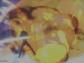 DRAGON BALL XENOVERSE 2_20161109105241