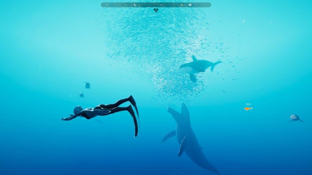 Beyond Blue recensione - Banchetto di sardine