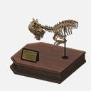 Cranio Pachicefalosauro